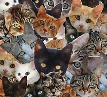 Kitty Collage by spookydooky