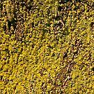 Lichen on a Palm tree by Trish Peach
