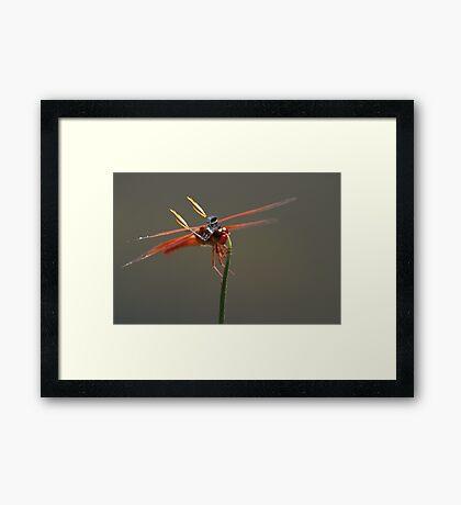 Dragin Fly Framed Print