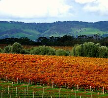 Autumn in the Vineyards by Bailey Designs