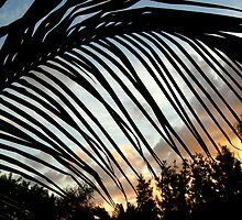 Palm leaves at sunset by triciamary