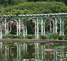 Lilypad Garden by jeffrae