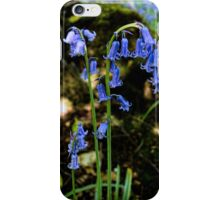 Bluebells iPhone Case/Skin