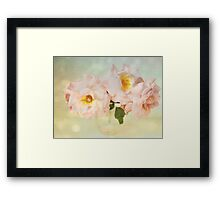 Pretty Pink Antique Roses Framed Print
