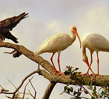 Two Egrets and Two Pigeons by Wanda Raines
