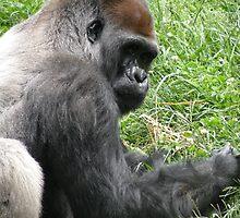 Gorilla 2 by Lauryn Guyer