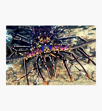 Lobster Photographic Print