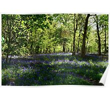 Magical Bluebells Poster