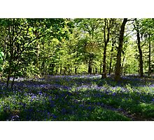 Magical Bluebells Photographic Print