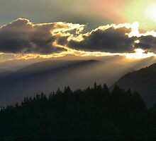 Rays Over The Pines by Larry Lingard-Davis