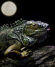 Night of the Iguana by Ann  Van Breemen