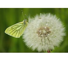 Early Butterfly Photographic Print