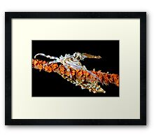 Xeno Crabs Framed Print