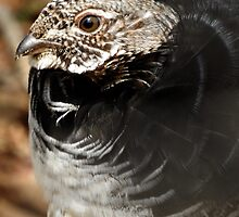 Ruffed Grouse by PeggCampbell
