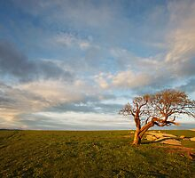The Geelong Landscape by Luka Skracic