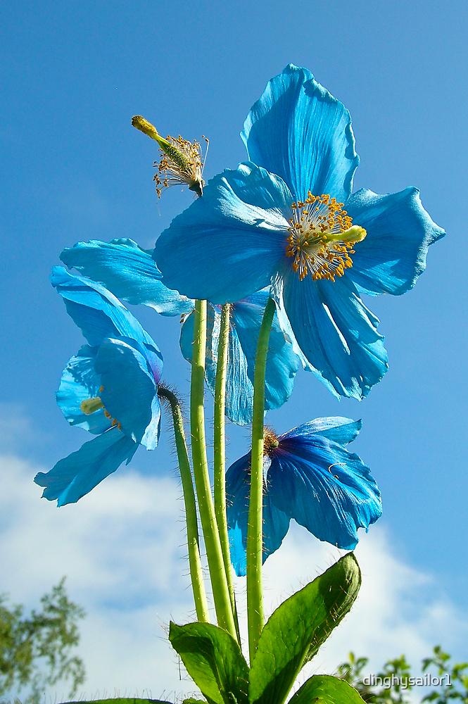 sky blue by dinghysailor1