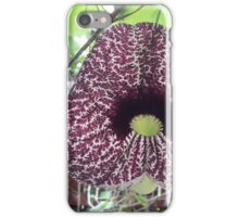 Dutchman Pipe Vine  iPhone Case/Skin