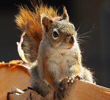 Red Squirrel on the Wood Pile by PeggCampbell