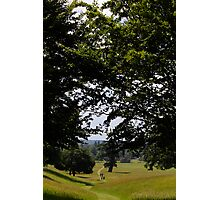 Woburn Walks Photographic Print