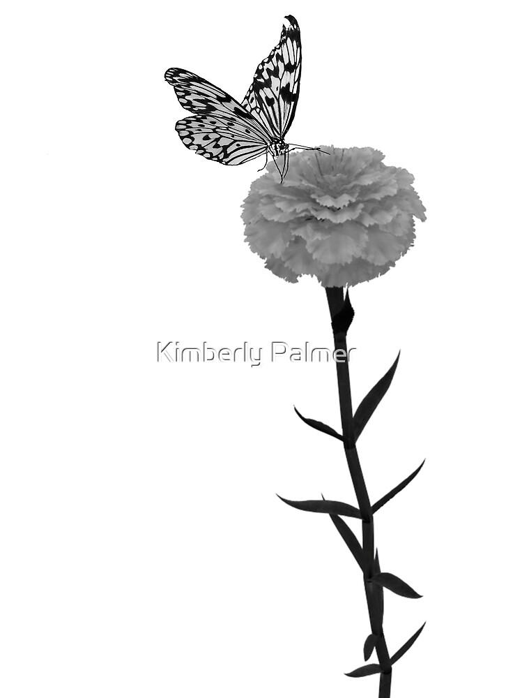 Carnation by Kimberly Palmer