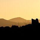 Sunset Ridges 2 by Chris Whitney