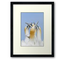 greetings my friends, gannets, Saltee Island, County Wexford, Ireland Framed Print