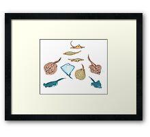 sea pancakes Framed Print