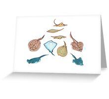 sea pancakes Greeting Card