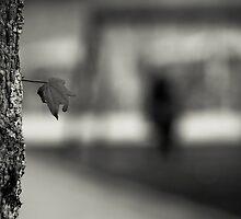 ombra di voi... by Ricardo Mendonça