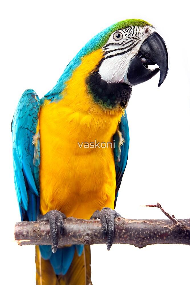 Parrot by vaskoni