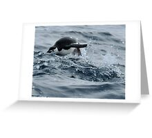 "Chinstrap penguin : ""hurdle race..."" Greeting Card"