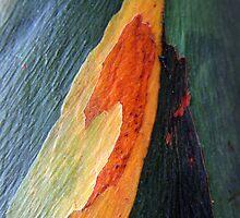 Nature's colours by Haydee  Yordan
