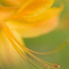 Whispy Azalea by Beth Mason