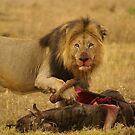 Possesive predator by Yolande van der Merwe