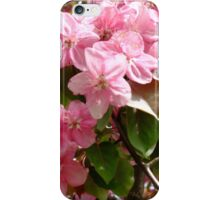 More Pink Blossoms iPhone Case/Skin