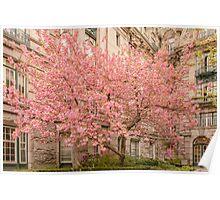 Brookline in bloom. Poster
