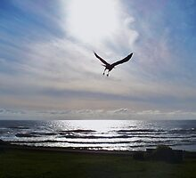 AS THE CROW FLY'S.....Yachats, Ore. At the Yachats Inn by trueblvr