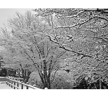 Winters Touch Black & White Photographic Print