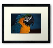 Pretty Bird! Framed Print