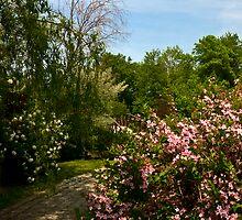 Garden Path on Niagara Parkway  Ontario by MarkEmmerson