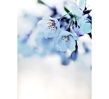 Beautiful cherry blossom flowers art photo print Photographic Print