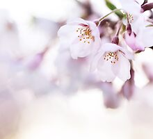 Beautiful pink cherry blossom art photo print by ArtNudePhotos