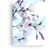 Sakura Japanese cherry blossom art photo print Canvas Print