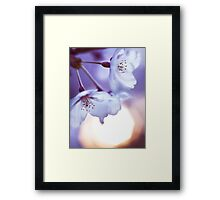 Beautiful cherry blossom and rising sun art photo print Framed Print