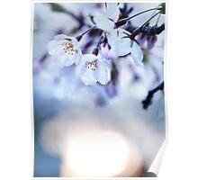 Cherry tree blossoms in morning sunlight art photo print Poster