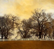Willows at the Horse Farm by Brian Gaynor