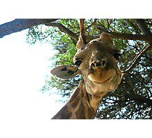 Hello Geoffrey! Photographic Print