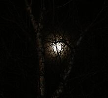 Moon through Bich Trees by papasan59