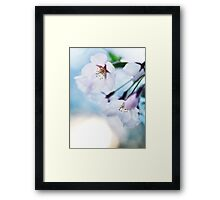 Beautiful cherry blossom flowers on blue sky background art photo print Framed Print