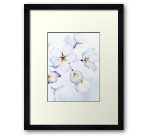 Flowers of Japanese cherry blossom in bright sunlight art photo print Framed Print